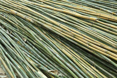 Group of Fresh bamboo wood for multipurpose Royalty Free Stock Photos