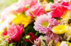 Group of fresh beautiful flower Royalty Free Stock Image