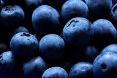 A group of fresh blueberries. stock images