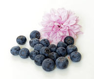 Group of fresh blueberries and purple chrysanthemum Royalty Free Stock Photo