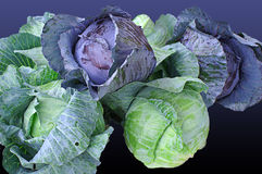 Group of Fresh Cabbages Royalty Free Stock Photo