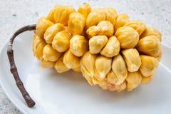 Group of fresh chempedak arils, a fruit native to South East Asia region. (scientific name Artocarpus integer) stock images