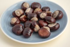 Group of fresh chestnuts on blue table, nuts one by one spread on light dish royalty free stock photos