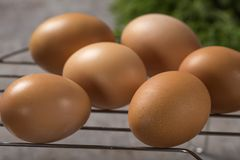 Group of fresh chicken eggs on a metallic grille with fresh gree Royalty Free Stock Photography