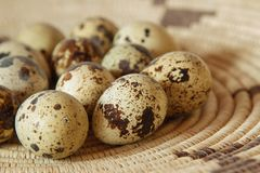 Quail Eggs in a Basket. A group of fresh and colorful quail eggs in a straw basket Stock Photos