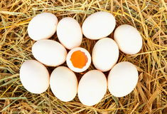 Group of fresh  duck eggs Stock Photography
