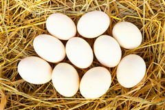 Group of fresh  duck eggs. In the straw nest Stock Photography