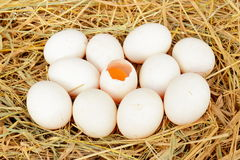 Group of fresh  duck eggs. In the straw nest Royalty Free Stock Photography