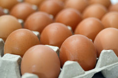 Group of fresh eggs in pater tray Royalty Free Stock Images