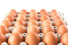 Group of fresh eggs on white Stock Image