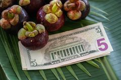 Group of Fresh Exotic Tropical Thai Fruit Mangosteens Garcinia mangostana with American Currency US Dollars on Banana Royalty Free Stock Image