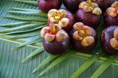 Group of Fresh Exotic Tropical Thai Fruit Mangosteens Garcinia mangostana on Banana Leaf Stock Photography
