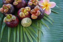 Group of Fresh Exotic Tropical Thai Fruit Mangosteens Garcinia mangostana with Digital Cryptocurrency Bitcoin on Royalty Free Stock Photos