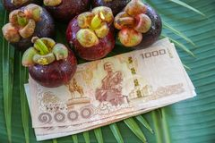 Group of Fresh Exotic Tropical Thai Fruit Mangosteens Garcinia mangostana with National Currency Baht on Banana Leaf Stock Image