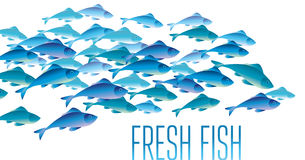 Group of fresh fish vector illustration for header,. Web, print, card and invitation. Plenty of herring or cod moving in the sea water Royalty Free Stock Images