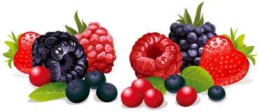 Group of fresh fruit vector illustration