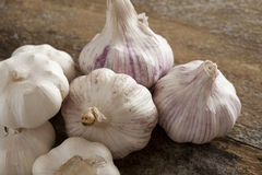 Group of fresh garlic bulbs. For use as a pungent aromatic seasoning in cookery lying on a wooden table Royalty Free Stock Images