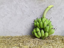 Group of fresh green banana. On dry grass and rough texture cement wall background Royalty Free Stock Images
