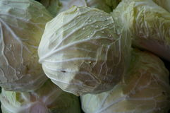 Group of fresh green cabbages Stock Images