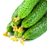 Group of Fresh green Cucumbers isolated on white background, clo. Se up macro Royalty Free Stock Images