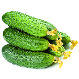 Group of Fresh green Cucumbers isolated on white background, clo Royalty Free Stock Images