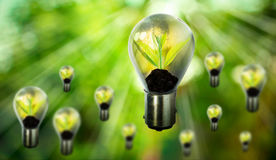Group of fresh green small plant in light bulb Royalty Free Stock Photography