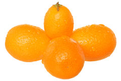 Group of fresh kumquat close u Stock Images