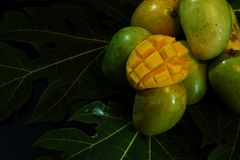 Group of fresh local mango tropical fruits of Thailand on papaya leaf with black background royalty free stock images