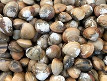 Group of fresh mussels, street market in Thailand. Natural texture royalty free stock photos