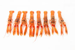 Group of fresh Norway lobsters on white background. Royalty Free Stock Photos