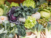 Group of Fresh Organic Assorted Green Vegetables Royalty Free Stock Images