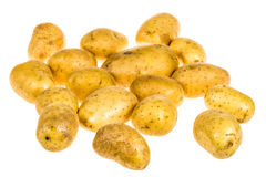 Group of fresh organic potatoes Royalty Free Stock Image