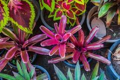 Group of Fresh Ornamental Plant in Garden Stock Photos