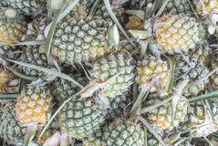 Group of fresh pineapple Royalty Free Stock Photography
