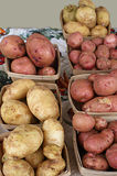 Group of Fresh Potatoes Royalty Free Stock Photography