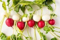 Group of fresh radishes on white background. Image of fresh group radishes Stock Image