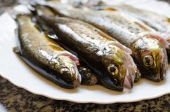 Group of fresh rainbow trouts in the dish. Fresh rainbow trouts on the plate on marble background royalty free stock photo