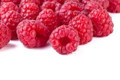Group of fresh raspberry isolated on white. Background Royalty Free Stock Images