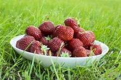 Group fresh red strawberries white plate, clean fruits, delicious and ready to eat. Group fresh red strawberries on white plate in the grass, ripened and clean Stock Photo