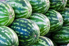 Group of fresh ripe watermelons. Group of fresh ripe green watermelons at an bazaar Royalty Free Stock Image