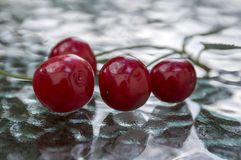 Group of fresh ripened fruits on glass table, red sour cherries. Four cherries with fruit stem Stock Images