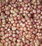 Group of fresh shallots Stock Photos