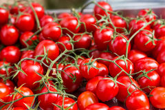 Group fresh small red tomato on branch Royalty Free Stock Photography