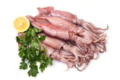 A group of fresh squid with lemon and parsley Stock Photography