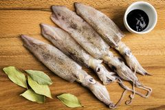 Group of fresh squids next to a bowl with ink and some bay leaves. Group of fresh squids next to a bowl with ink and some laurel leaves on a wooden board stock photography