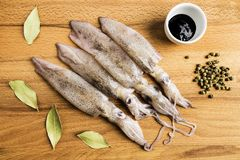 Group of fresh squids next to a bowl with ink, spices and some bay leaves. On a wooden board royalty free stock photos