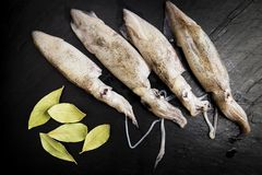 Group of fresh squids next to some bay leaves. On a black slate board stock photography