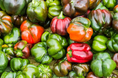 Group of fresh sweet peppers. Royalty Free Stock Photography