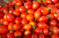 Group of fresh tomatoes. Royalty Free Stock Images