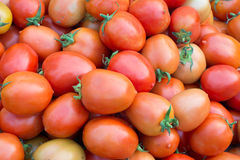 Group of fresh tomatoes Royalty Free Stock Photography